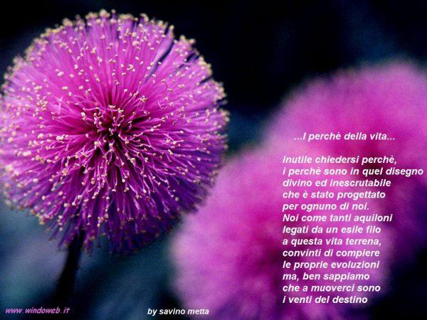 i-perche-della-vita-face-book