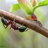 il mondo delle formiche