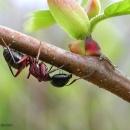 il mondo delle..formiche..