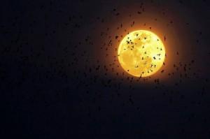 luna con stormouccelli