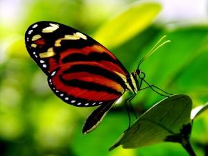 + farfalle 16
