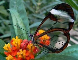 + farfalle 24