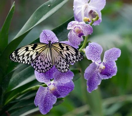 + farfalle 26