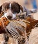 La caccia