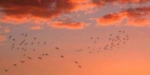 tramonto rondini 3