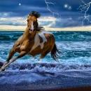 Criniera al vento