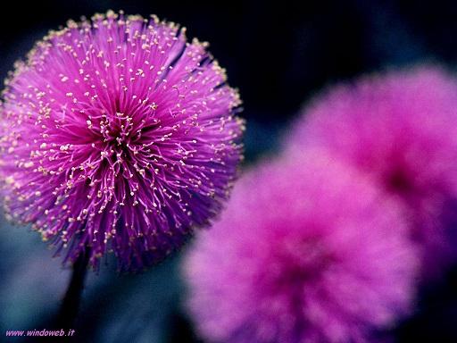 simbologia dei fiori