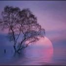 Attendendo l'alba