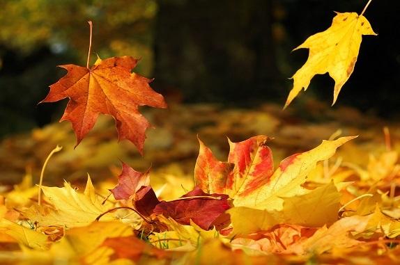 foglie al vento ok